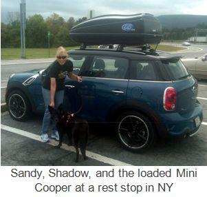 Sandy Shadow and Mini